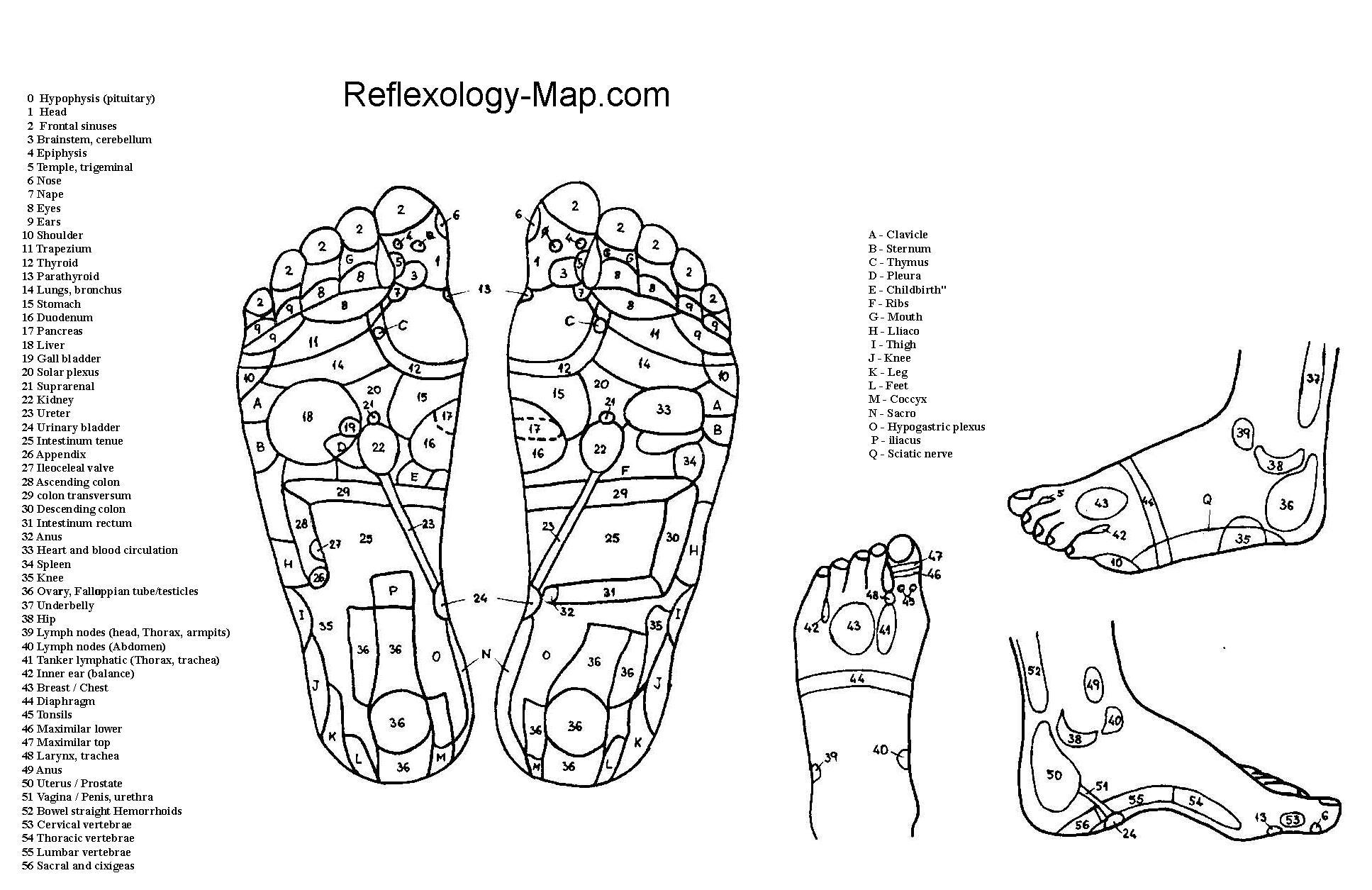 foot reflexology chart 06