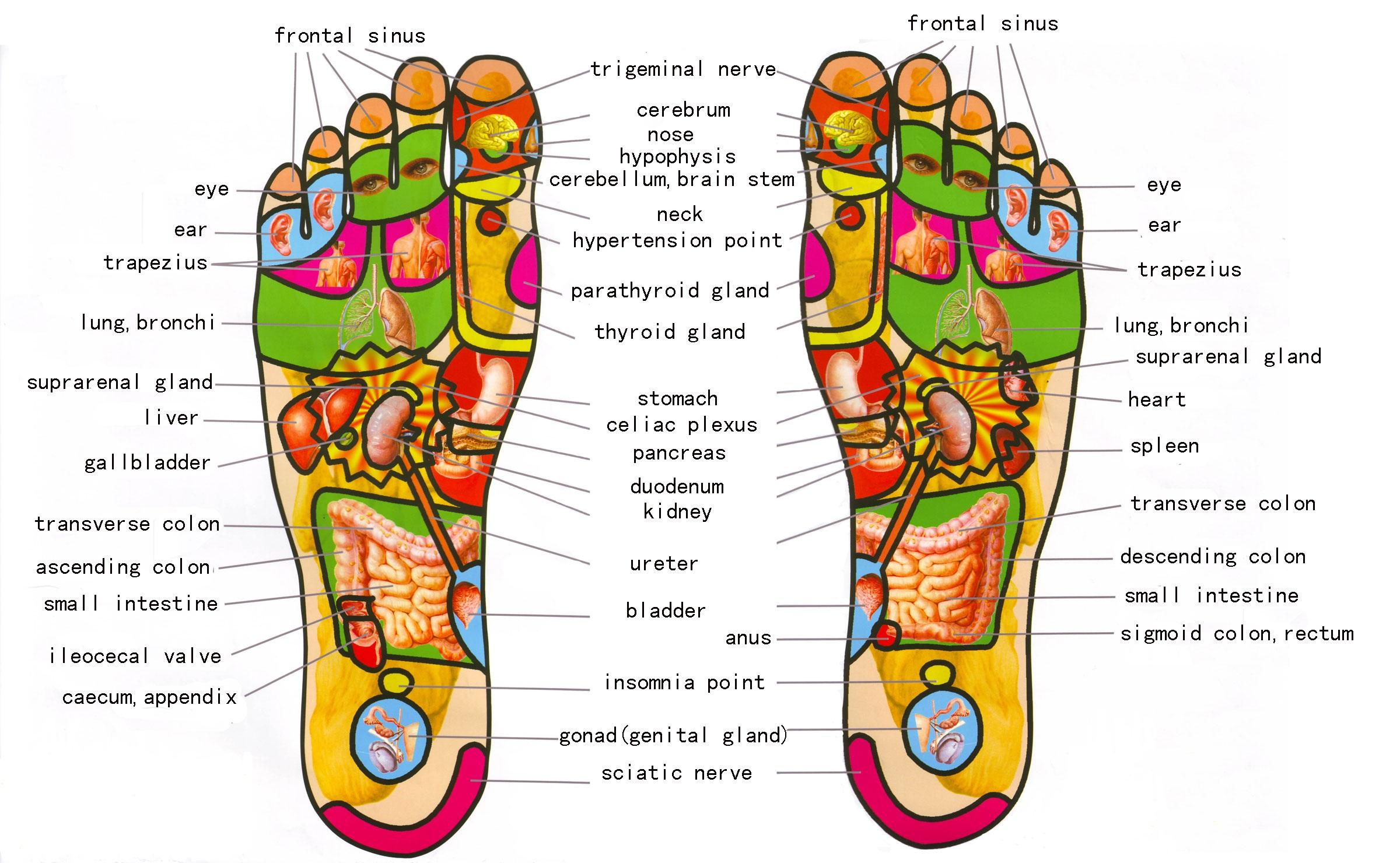 foot reflexology chart 07