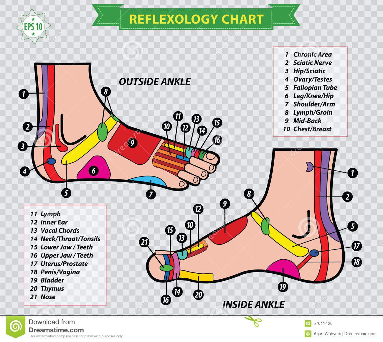 foot reflexology chart 13