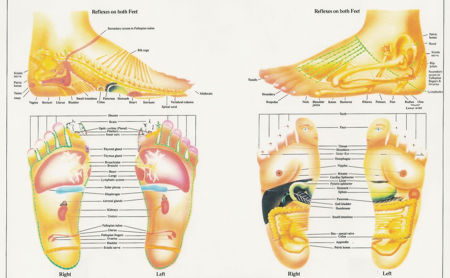 foot reflexology chart 15