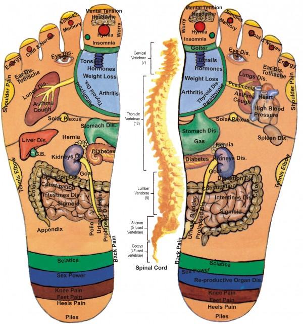 foot reflexology chart 17