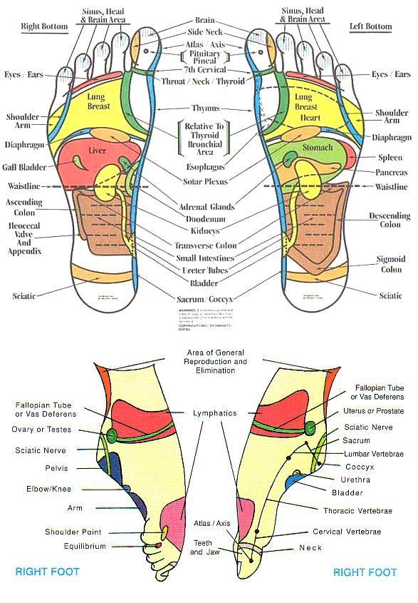 foot reflexology chart 19