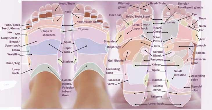 foot reflexology chart 27