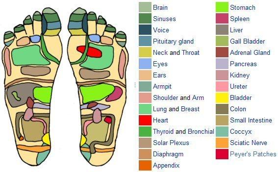 foot reflexology chart 29